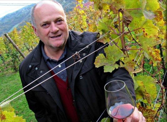 Korak u vinogradu +