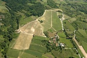 vinograd-zrak1