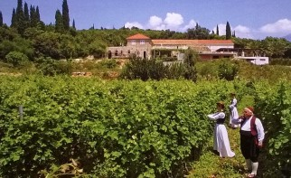 Crvik vinograd i podrum 5